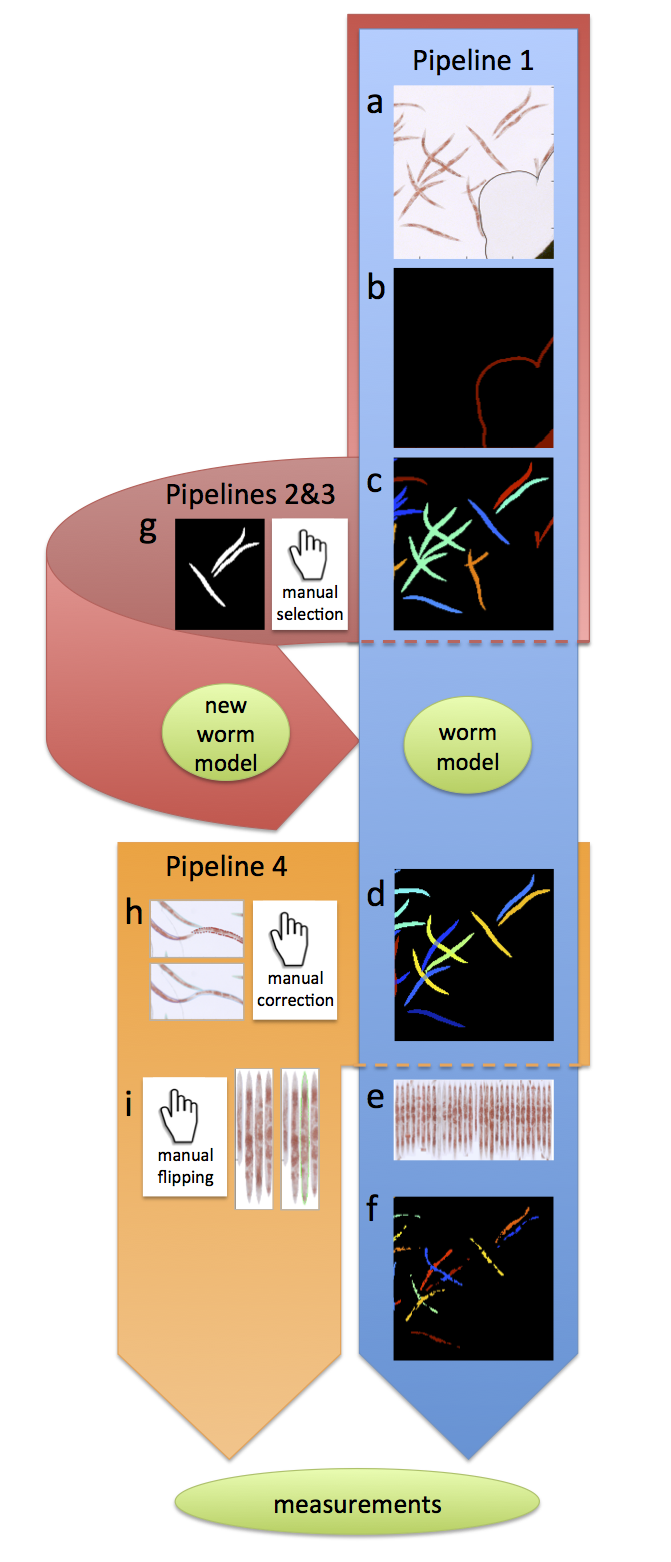 Worm Toolbox diagram